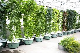 Benefits Of Hydroponic Grow Kits